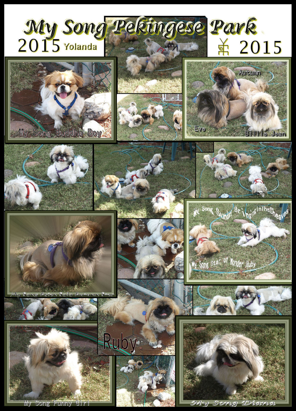 MY Song Pekingese Park Photo Collage